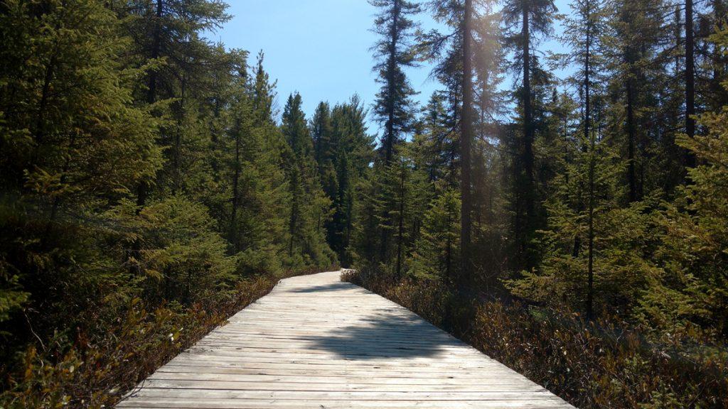 Spruce-Bog-Boardwalk-Toronto