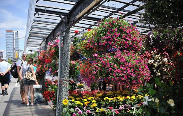Toronto-Toronto Flower Market