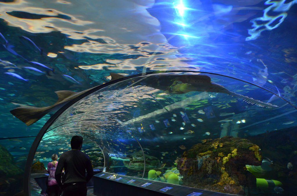 Toronto-Ripley's-Aquarium-Canada